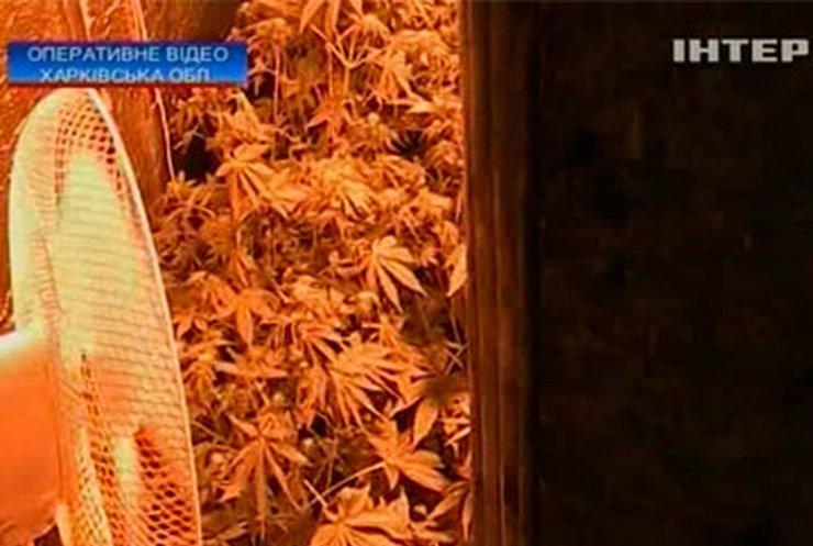Житель Харьковщины превратил подвал в конопляную оранжерею