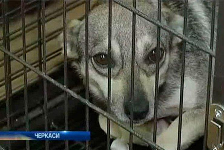 Жители черкасской многоэтажки жалуются на соседа, который держит восьмерых собак
