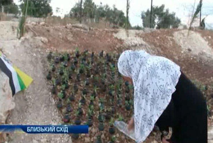 Жительница Палестины разбила цветник на месте гибели сына