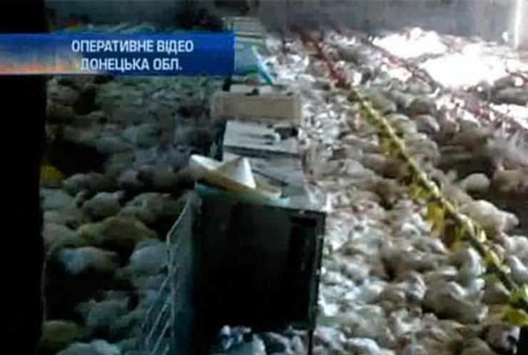 Донецкая милиция накрыла нелегальную куриную ферму