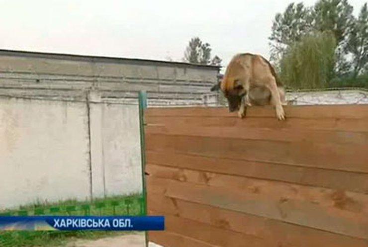 В колонии на Харьковщине показали один день жизни сторожевого пса