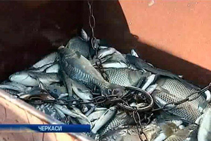 Кременчугское водохранилище пополнили 90 тоннами малька