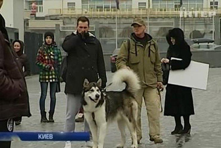 В  Киеве состязались ездовые собаки