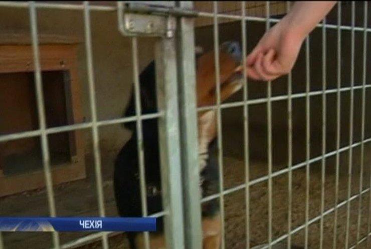 Страны ЕС открыли границы для бездомных собак