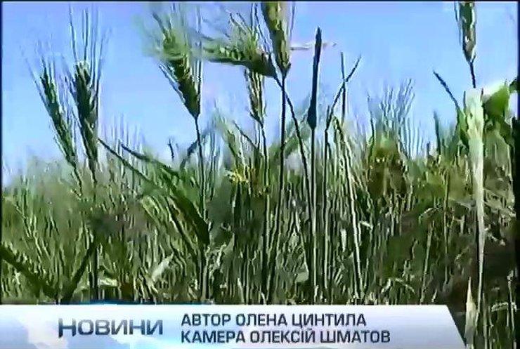 Яценюк оголосив масштабну приватизацію підприємств в агросфері