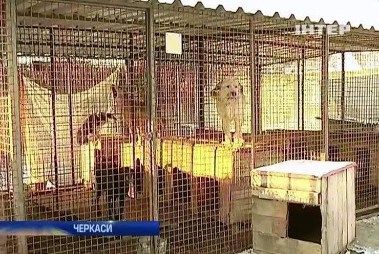 У Черкасах чиновники залишили собак у притулку напризволяще