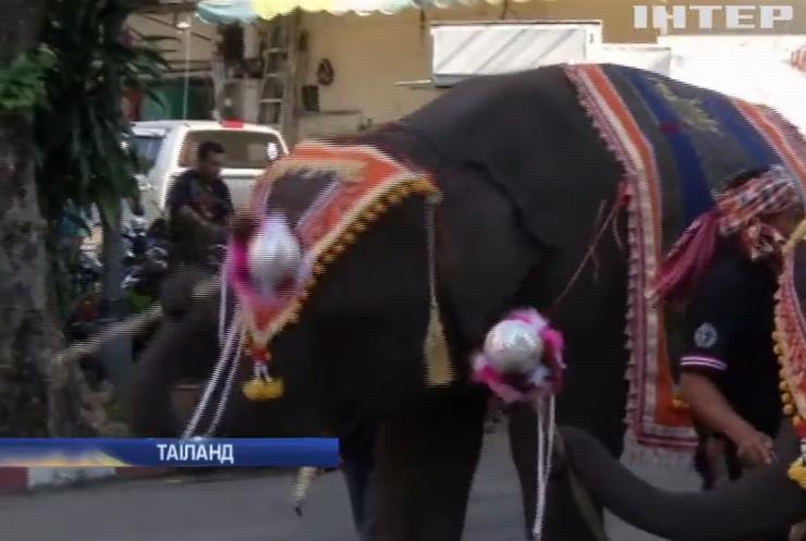 У Таїланді слони заполонили вулиці міста Сурін