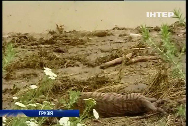 Після повені в Тбілісі тигр загриз людину