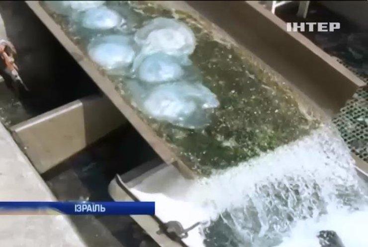 В Ізраїлі медузи мало не зупинили роботу електростанції