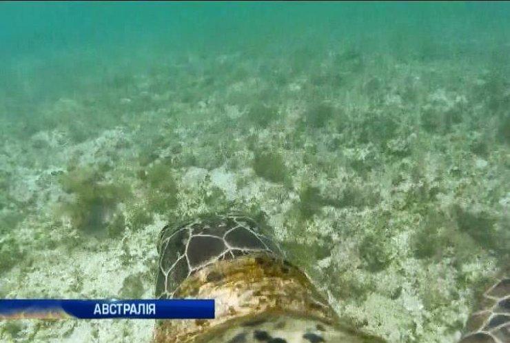 ЮНЕСКО відмовилася визнати небезпеку Великому бар'єрному рифові