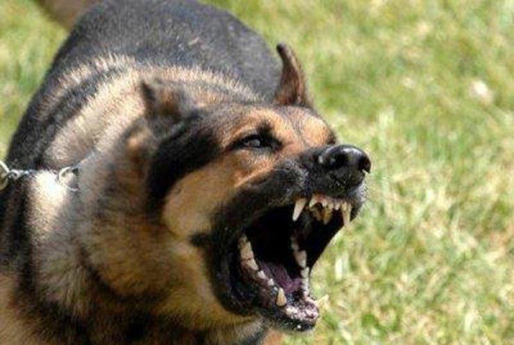 В России при уничтожении продуктов едва не задавили собаку