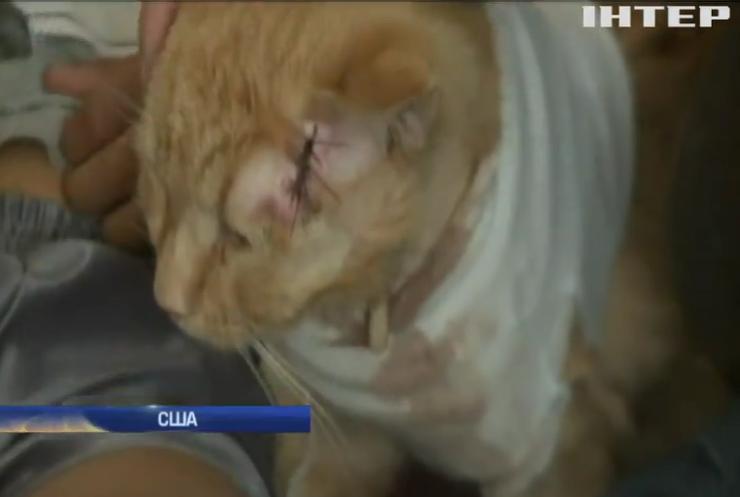 В США кот спас малыша от пули