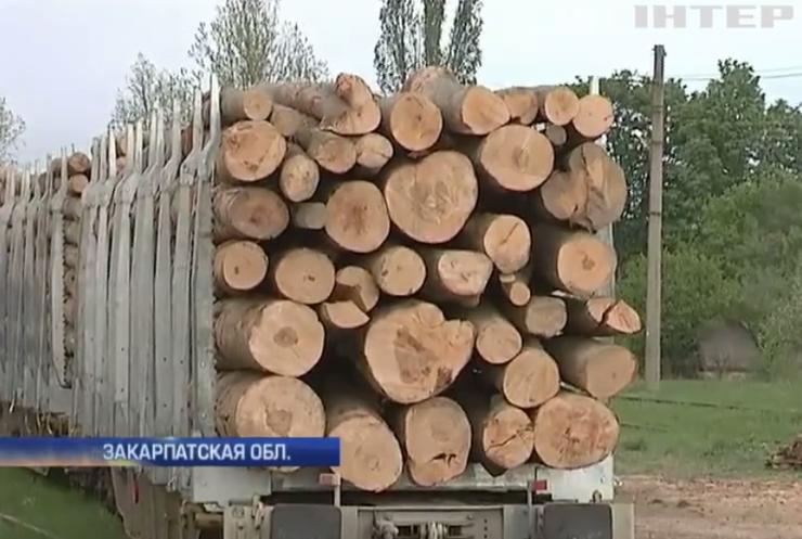 Владимир Гройсман потребовал наказать виновных в контрабанде леса