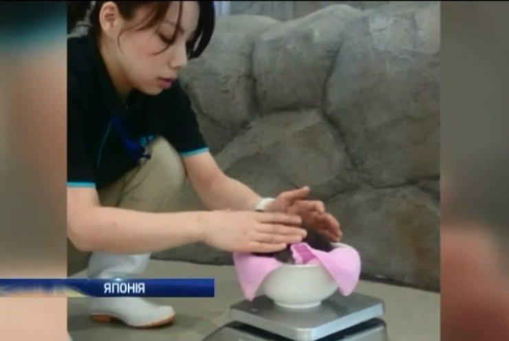 У Японії виростили штучно заплідненого пінгвіна