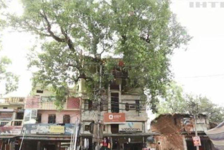Оселя з деревом всередині: в Індії з'явився унікальний будинок