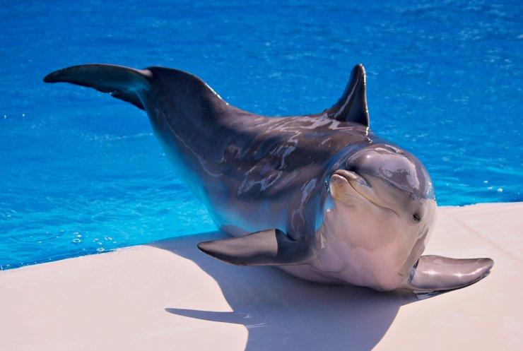 Робот-дельфін зніматиметься у голлівудських фільмах