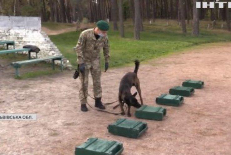Чотирилапі прикордонники: як тренують службових собак