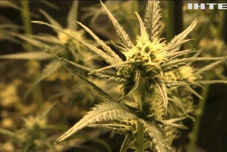 У Мексиці узаконюють марихуану