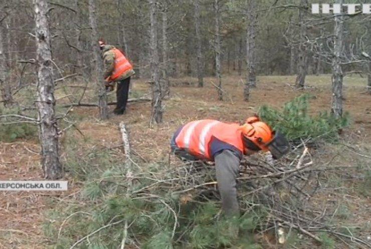 Придбання живої ялинки не шкодить екології - заявили на Херсонщині
