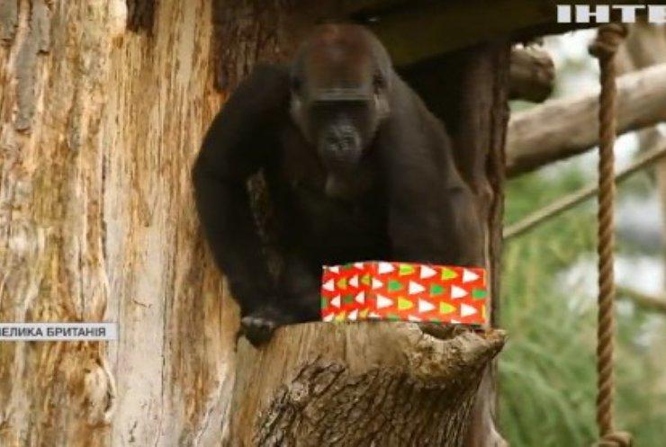 У Лондоні привітали мавп різдвяним частуванням