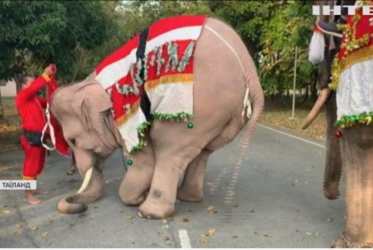 У Таїланді слони подарували школярам медичні маски