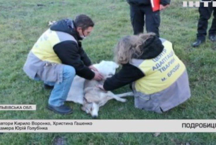 На Львівщині підлітки жорстоко побили собаку