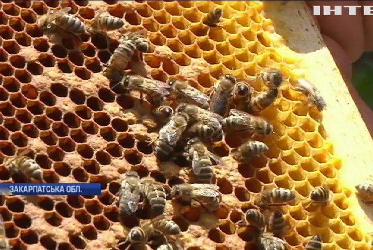 Не солодке життя пасічників: чи залишиться Україна експортером меду?