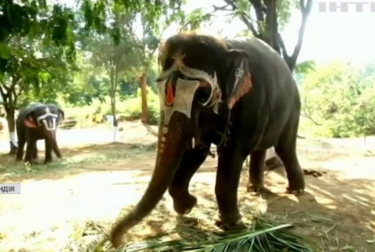 В Індії слонів із храмів відправили на реабілітацію