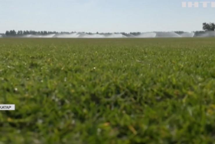 У Катарі масово вирощують траву для Кубка світу з футболу