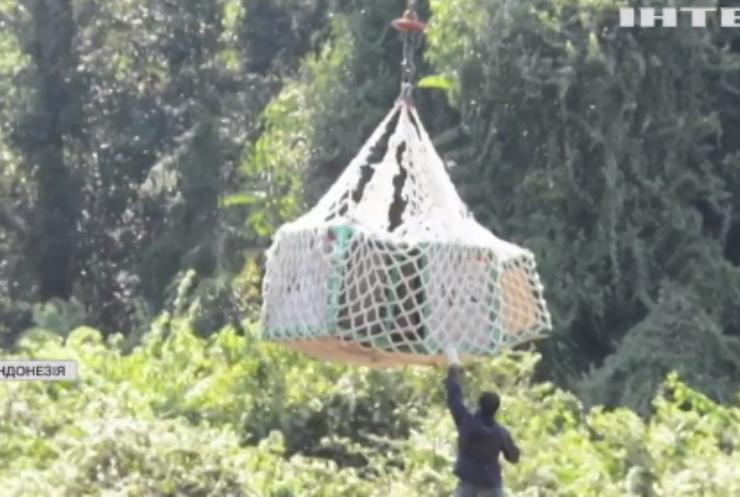 На острів Борнео випустили з неволі десятьох орангутангів