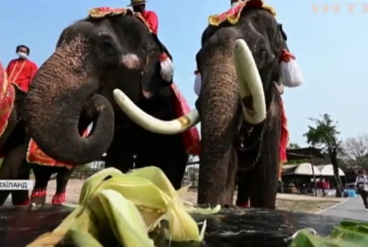 У Таїланді відзначили день слона