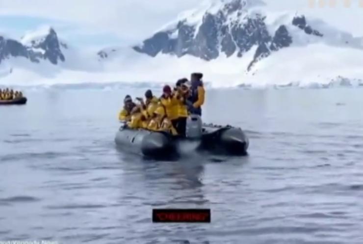 Пінгвін врятувався від косаток у туристичному човні
