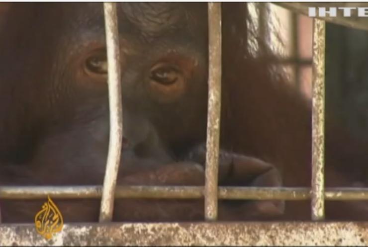ВООЗ закликає припинити продаж живих диких тварин