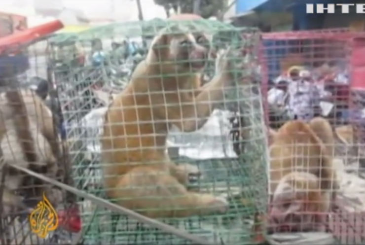 У ВООЗ закликають припинити торгівлю дикими тваринами