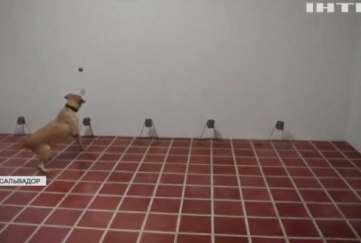 У Сальвадорі тренують собак на виявлення COVID-19