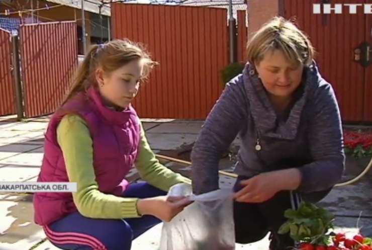 Закарпаття зазеленіло: базарні прилавки ломляться від свіжої городини