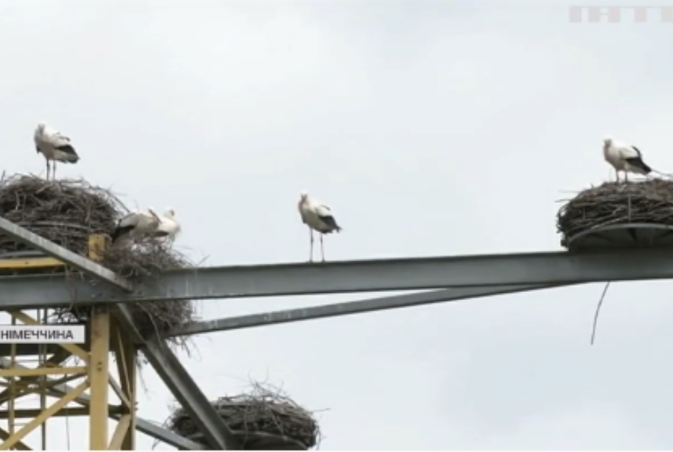 У Баварії лелеки знайшли собі незвичайну домівку
