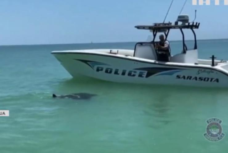 Поліція Флориди зафільмувала допитливого ската