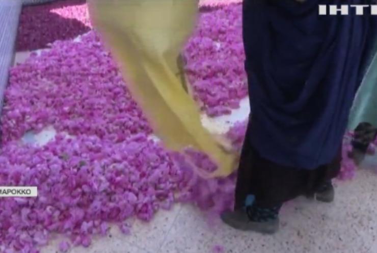 Трояндовий рай: у Марокко почали збирати тонни рожевих пелюсток