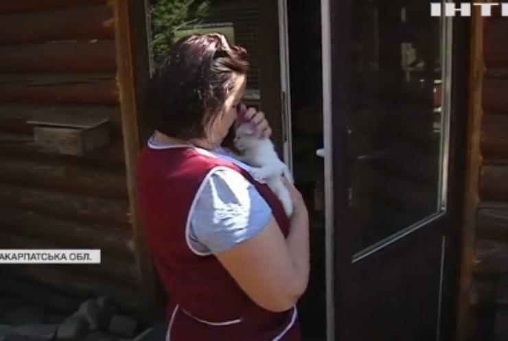 На Закарпатті туристам пропонують відвідати незвичний заклад