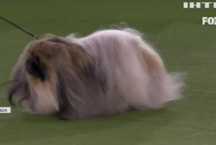 У Нью-Йорку відбулася виставка собак