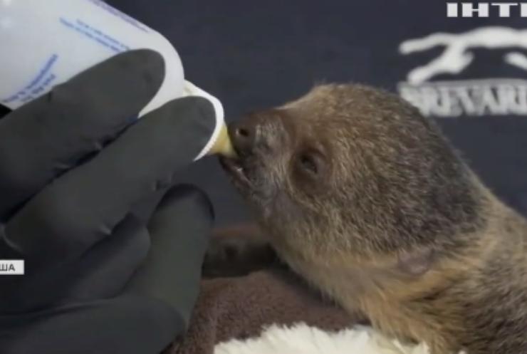 У зоопарку Флориди народилося дитинча лінивця