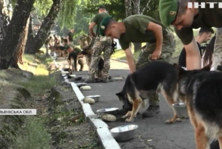 На Львівщині тренують чотирилапих захисників кордону для параду у День Незалежності