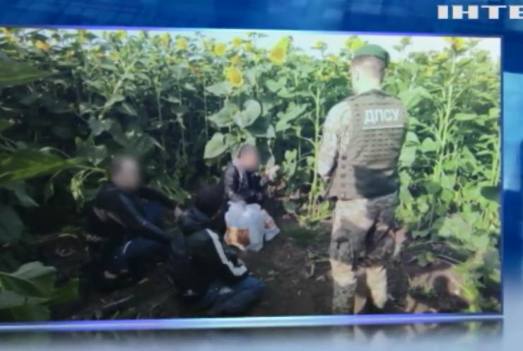 На Харківщині прикордонники зловили злодіїв у полі соняшників
