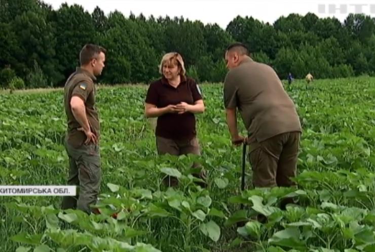 Радіоактивні харчові продукти: чому на Житомирщині користуються забороненою землею?