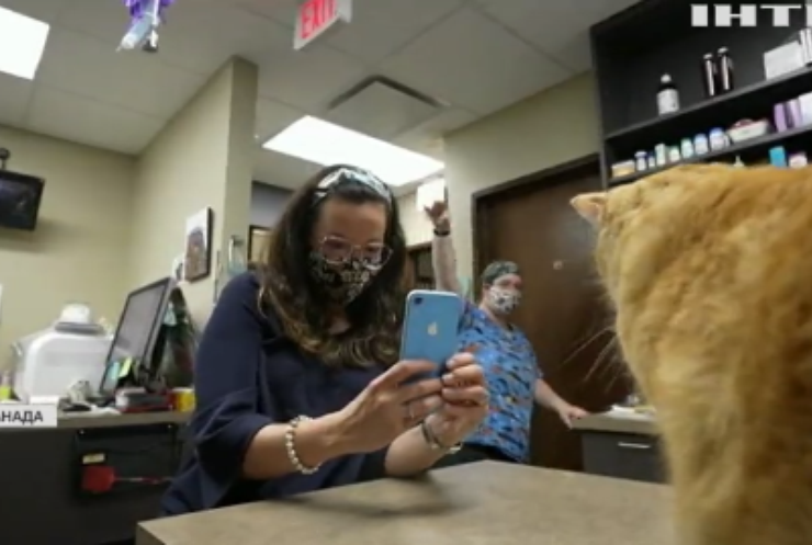 Смартфон навчили зчитувати емоції котів