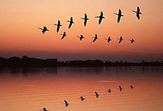 Перелётные птицы могут ориентироваться в любой местности с помощью собственного зрения, ведь их глаза в буквальном