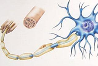 CHMP дал положительное заключение по препарату Гиления для лечения рассеянного склероза