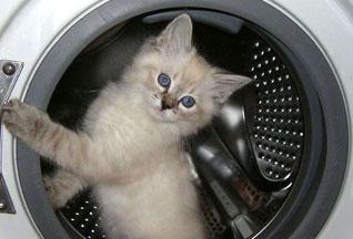 Подключить стиральную машину, варочную (8-067-502-09-20 установить Киев, Бровары ВСЕ РАЙОНЫ ), стеклокерамическую...