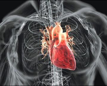 Чтобы сердце было здоровым, образ жизни должен быть правильным. Фото away.com